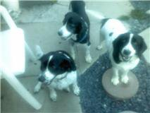 Buster (top), Chloie (left), Mollie (right)
