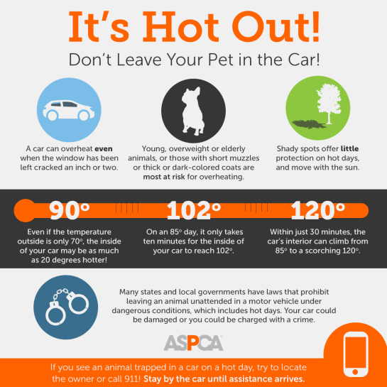 hot-cars_infographic-update_072017_shareable_b